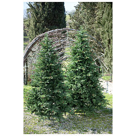 STOCK Austrian Fir Christmas tree 240 cm with pinecones for outdoor s3