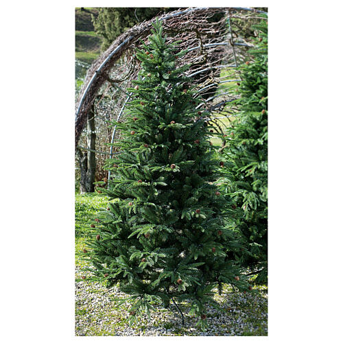 STOCK Austrian Fir Christmas tree 240 cm with pinecones for outdoor 1