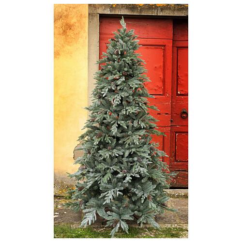 STOCK Albero di Natale 240 cm pigne Colorado Blue pigne per esterno 1