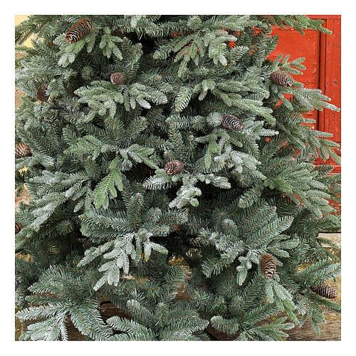 STOCK Albero di Natale 240 cm pigne Colorado Blue pigne per esterno 2