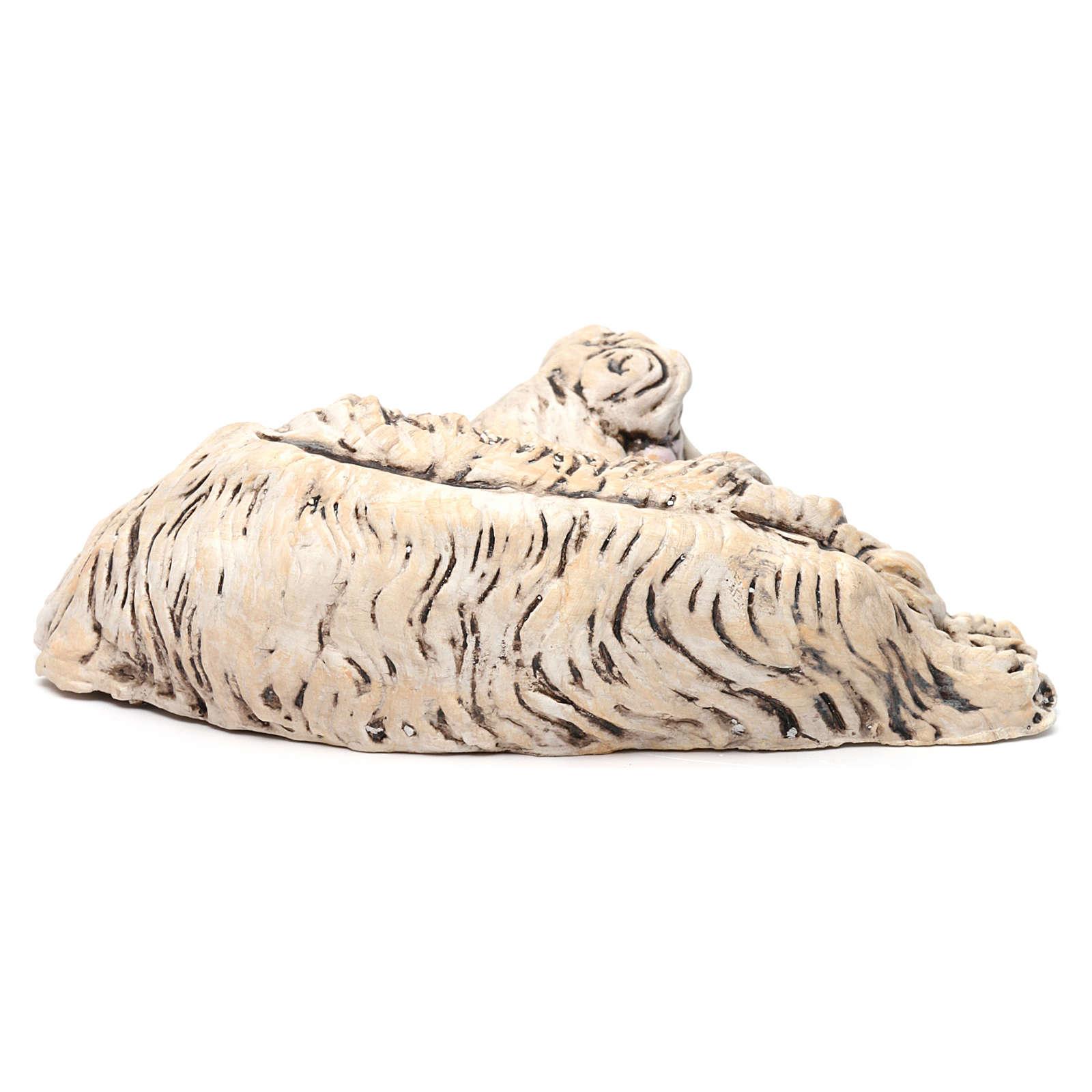Pecorella sdraiata rivolta a destra per il presepe Napoli stile 700 di 35 cm 4