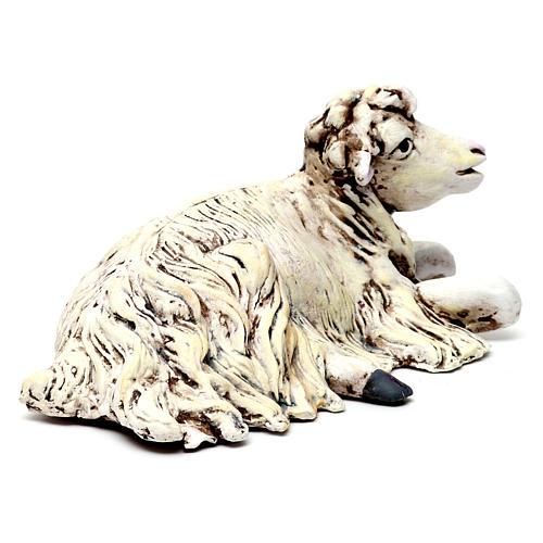 Oveja de rodillas con la cabeza a la derecha para belén Nápoles estilo 700 de 35 cm de altura media 3