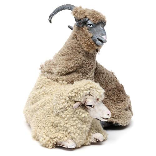 Caprone con pecorella per presepe napoletano stile '700 di 35 cm 3