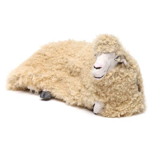 Pecora rivolta a destra con lana per presepe Napoli stile '700 di 35 cm 2