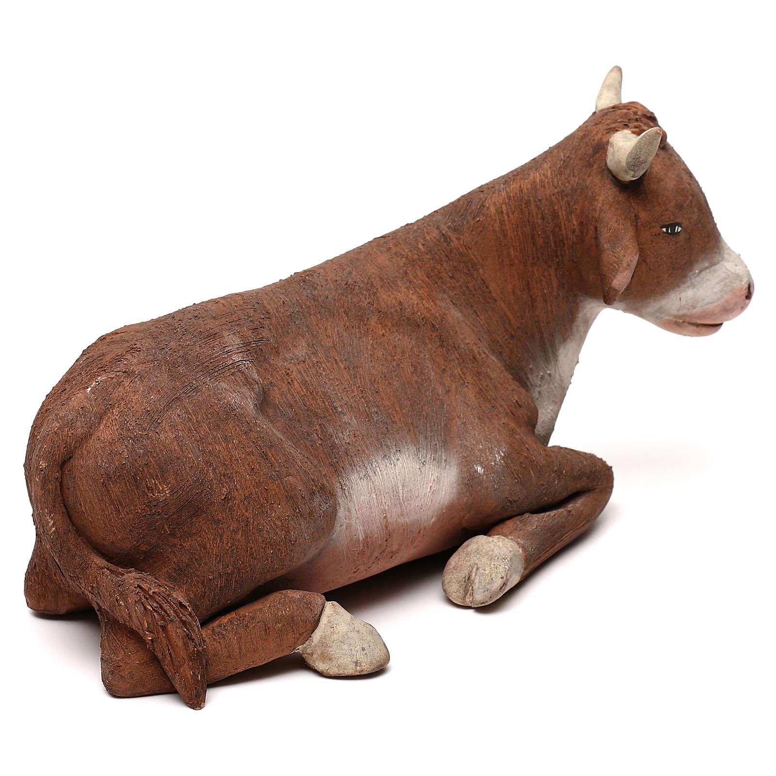 STOCK Bue in terracotta 18 cm presepe napoletano 4