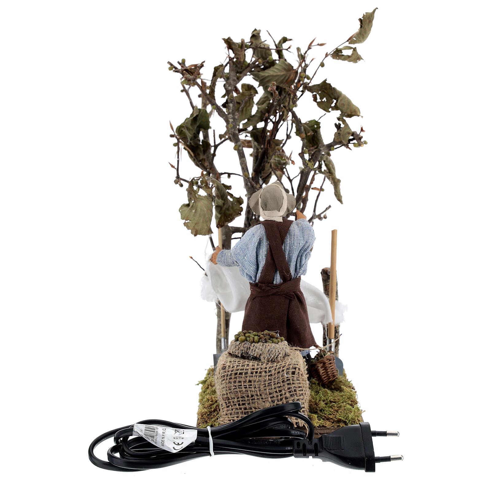 Raccoglitore olive movimento napoletano 14  cm 4