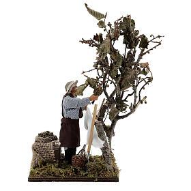 Homem colhendo azeitonas movimento presépio napolitano com figuras altura média 14 cm s1