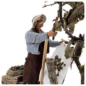 Homem colhendo azeitonas movimento presépio napolitano com figuras altura média 14 cm s2