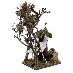 Homem colhendo azeitonas movimento presépio napolitano com figuras altura média 14 cm s3