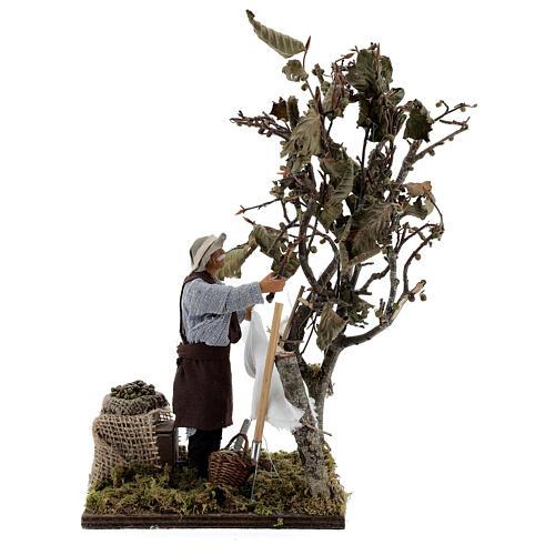 Homem colhendo azeitonas movimento presépio napolitano com figuras altura média 14 cm 1