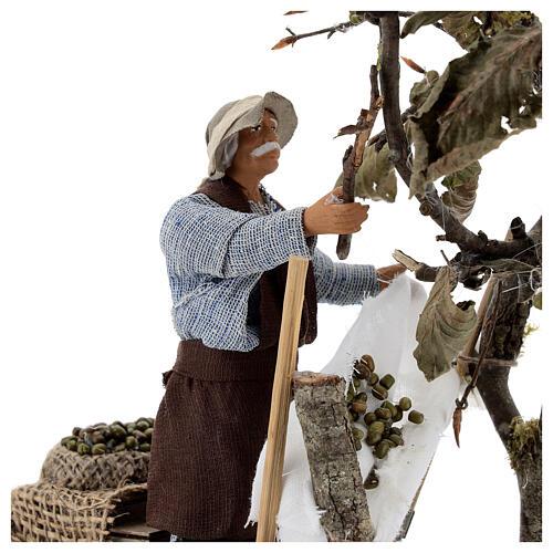 Homem colhendo azeitonas movimento presépio napolitano com figuras altura média 14 cm 2