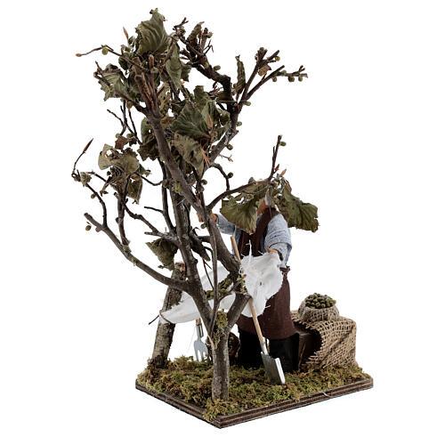 Homem colhendo azeitonas movimento presépio napolitano com figuras altura média 14 cm 3