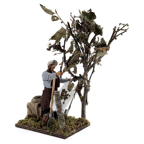 Homem colhendo azeitonas movimento presépio napolitano com figuras altura média 14 cm 4