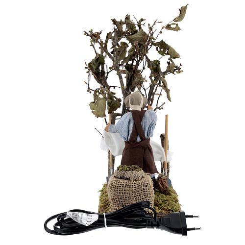 Olive picker, animated Neapolitan nativity 14 cm 5