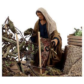 Woman collecting grapes, animated Naples nativity 12 cm s2