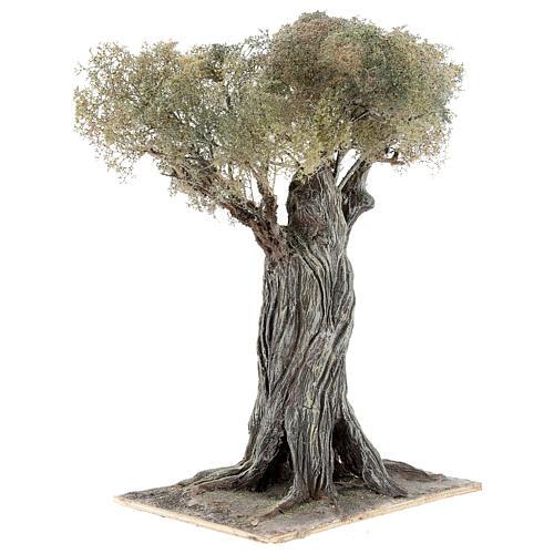 Miniature olive tree Neapolitan nativity scene 30 cm in papier mache wood 3