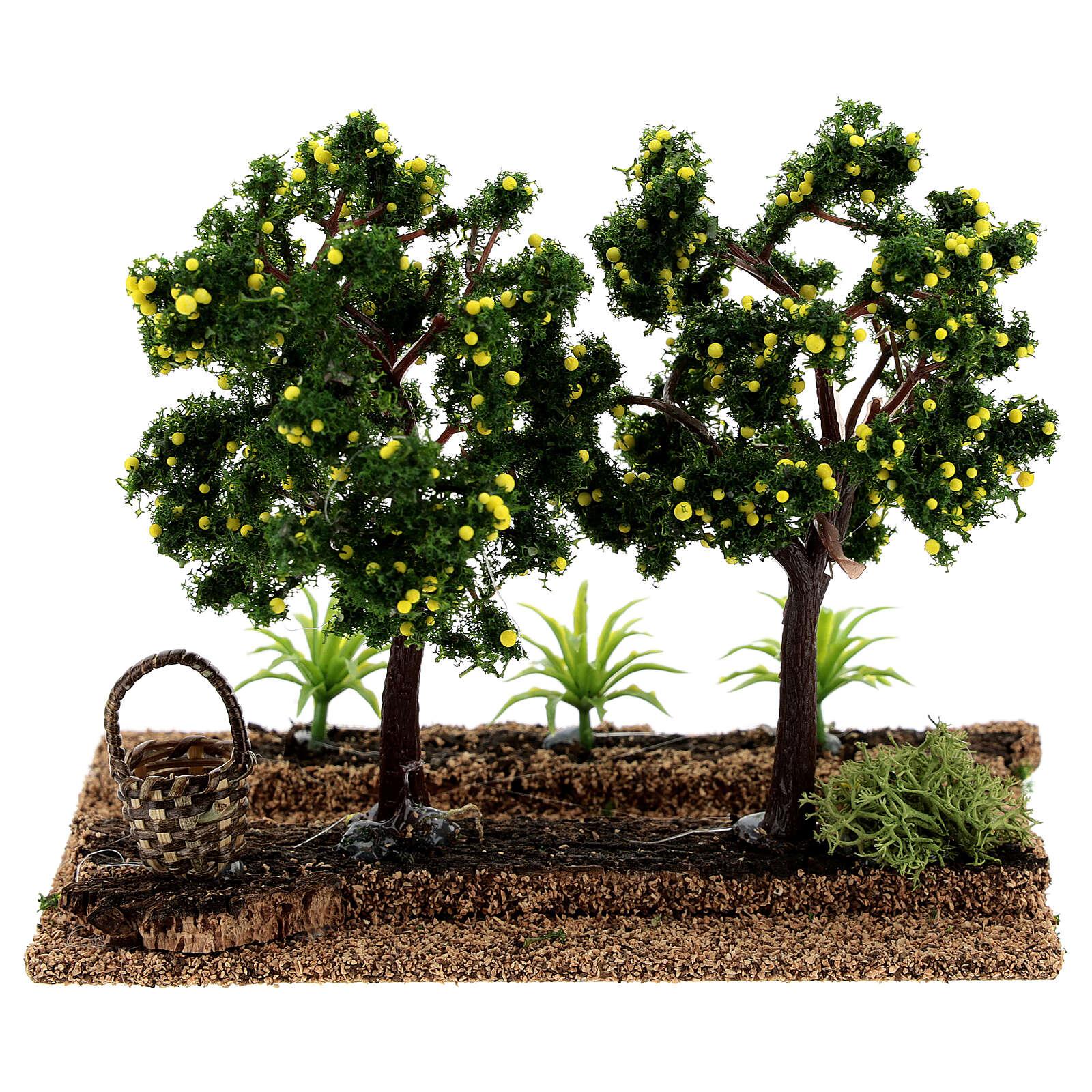 Huerto limones belenes 6-8 cm 15x15x10 cm 4