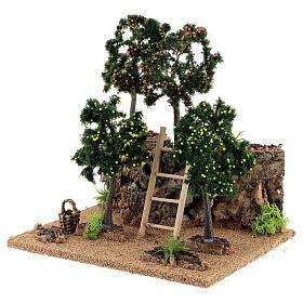 Miniature citrus grove 20x15x20 cm s2