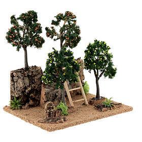 Miniature citrus grove 20x15x20 cm s3