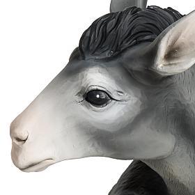 Boeuf et âne crèche Noel fibre de verre 60 cm s4