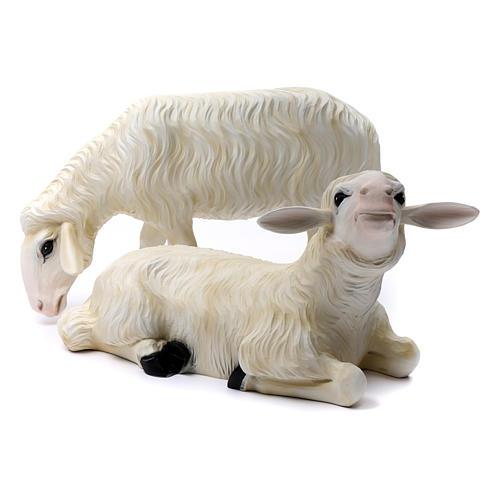 Duas ovelhas para Presépio com figuras de altura média 80 cm fibra de vidro pintada 1